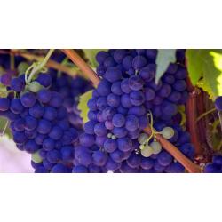 Περισσότερο ελληνικό κρασί,παρακαλώ | Γιάννης Καρακάσης MW